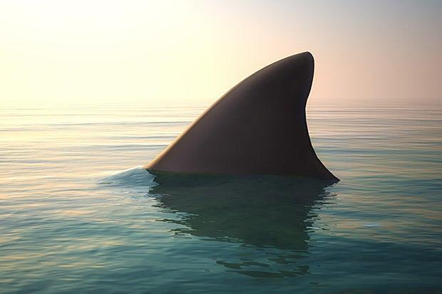 Sharky Surfaces With True Tales Of Shark Tank Computerworld