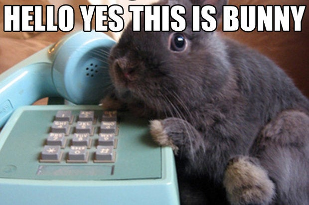 the list landlines bunny