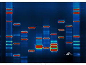 DNA fingerprint genetics