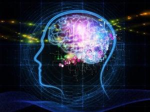 psychology mind state brain