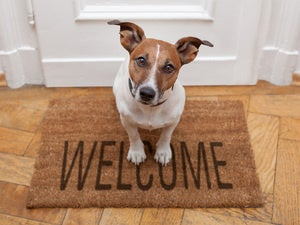Dog on a welcome mat [HOLD for Computerworld's Best Places to Work in IT 2017]