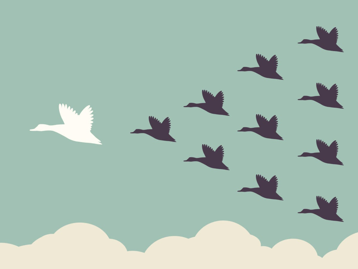 illustration of flock of geese leading
