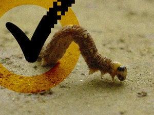 worms virus symantec
