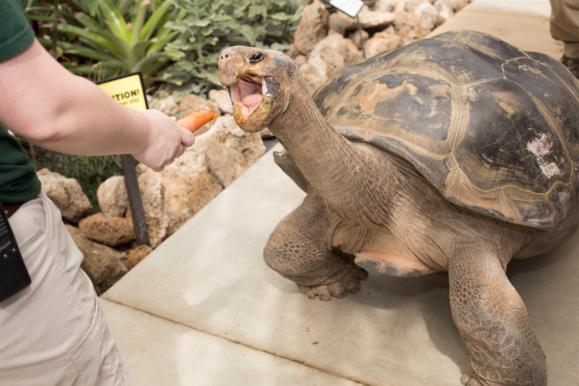 pokemon go toledozoo turtle