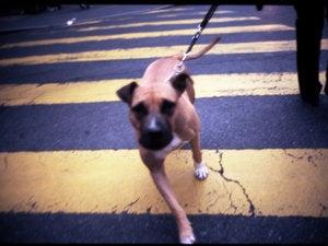 dog on leash mean