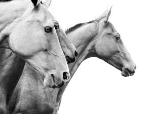 Handicapping the AI modeling horse race