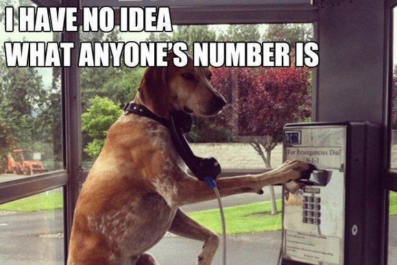 the list dog payphone primary