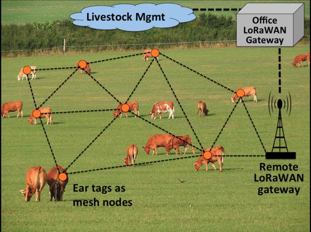 Dairy farming, livestock management, cattletraxx, skilledanalysts