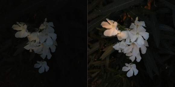iphone7 camera test flowers