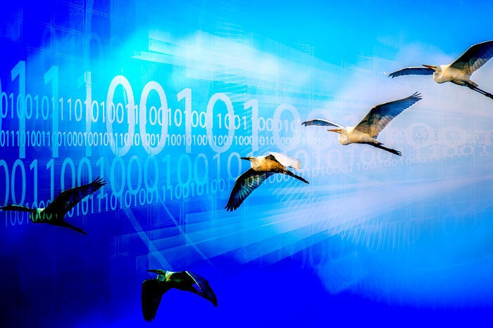 birds migration software