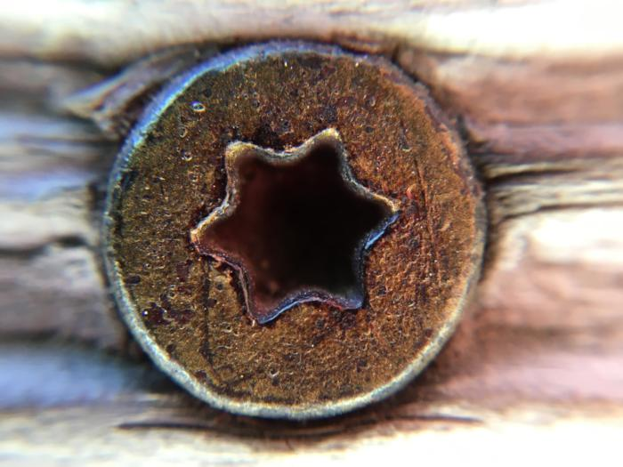 Olloclip 4-in-1 Lens macro sample