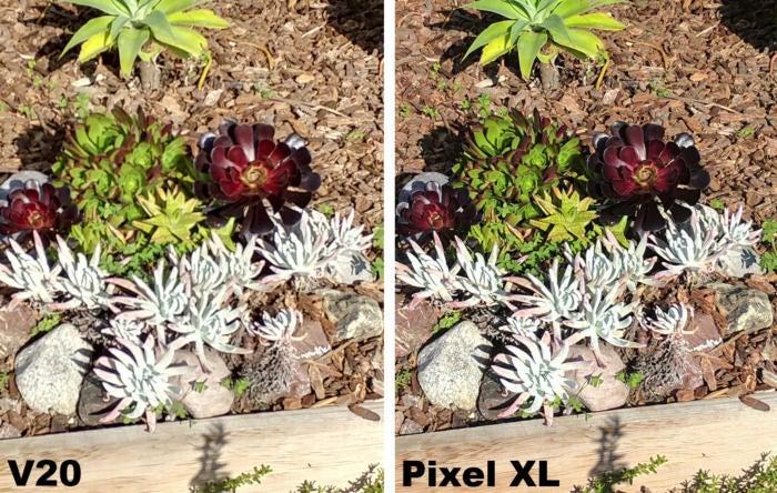 v20 v pixel xl succulents