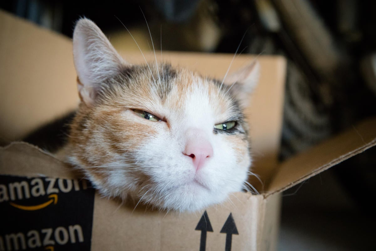 Amazon cat in box