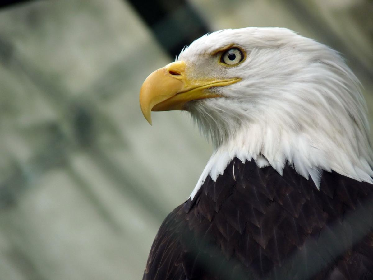 Apache Eagles keeps an eye on big data usage