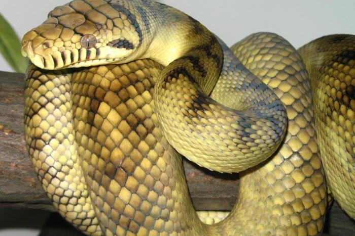 Python power comes to SQL Server 2017