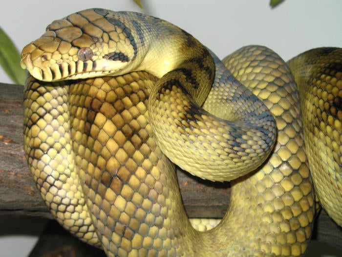 Microsoft brings Python coding help beyond Visual Studio