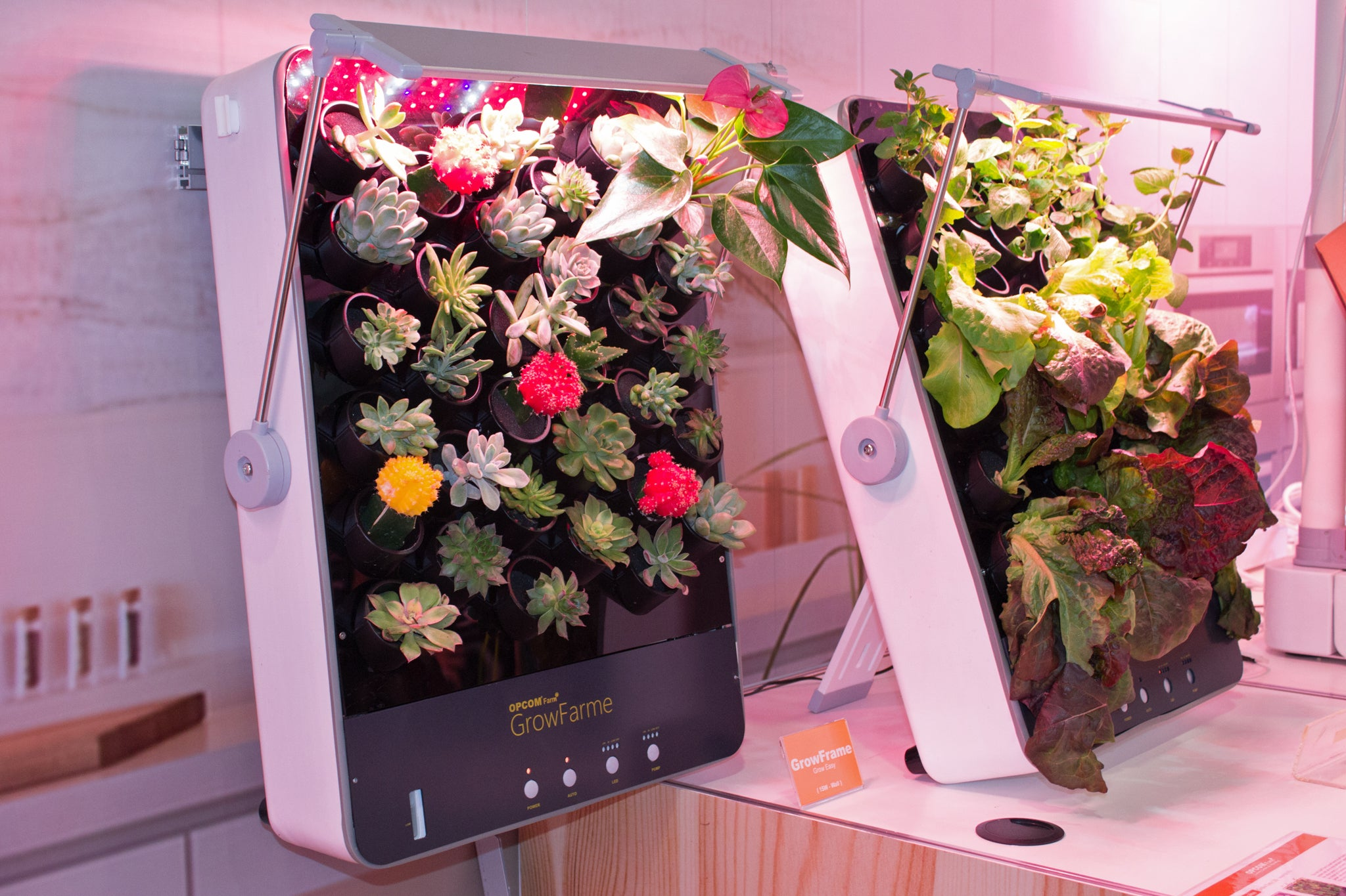 Opcom Farm's GrowBox and GrowWall let you raise vegetables indoors on indoor herb growing systems, indoor plant arrangements, indoor hydroponic plant systems, indoor garden lights, indoor fort kits, indoor hydroponic growing systems,
