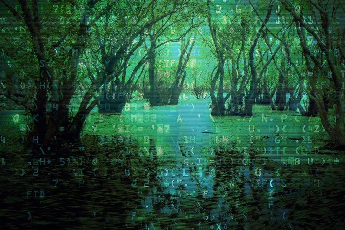 swamp data
