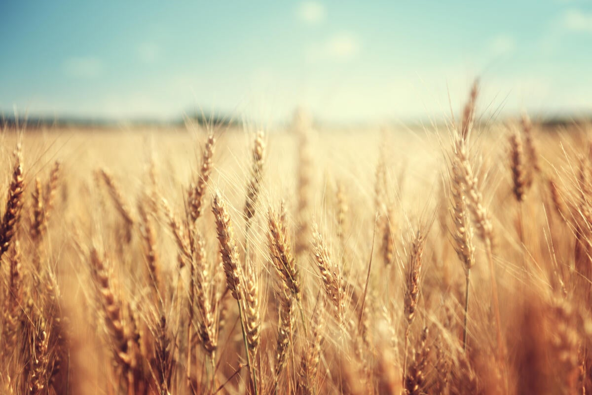 Monsanto: Driving digital leadership to elevate the business (and feed the world)
