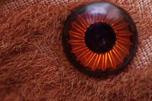 1 intro toys eye