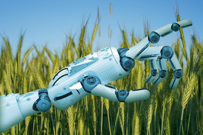 Artificial Intelligence robotic in wheat field