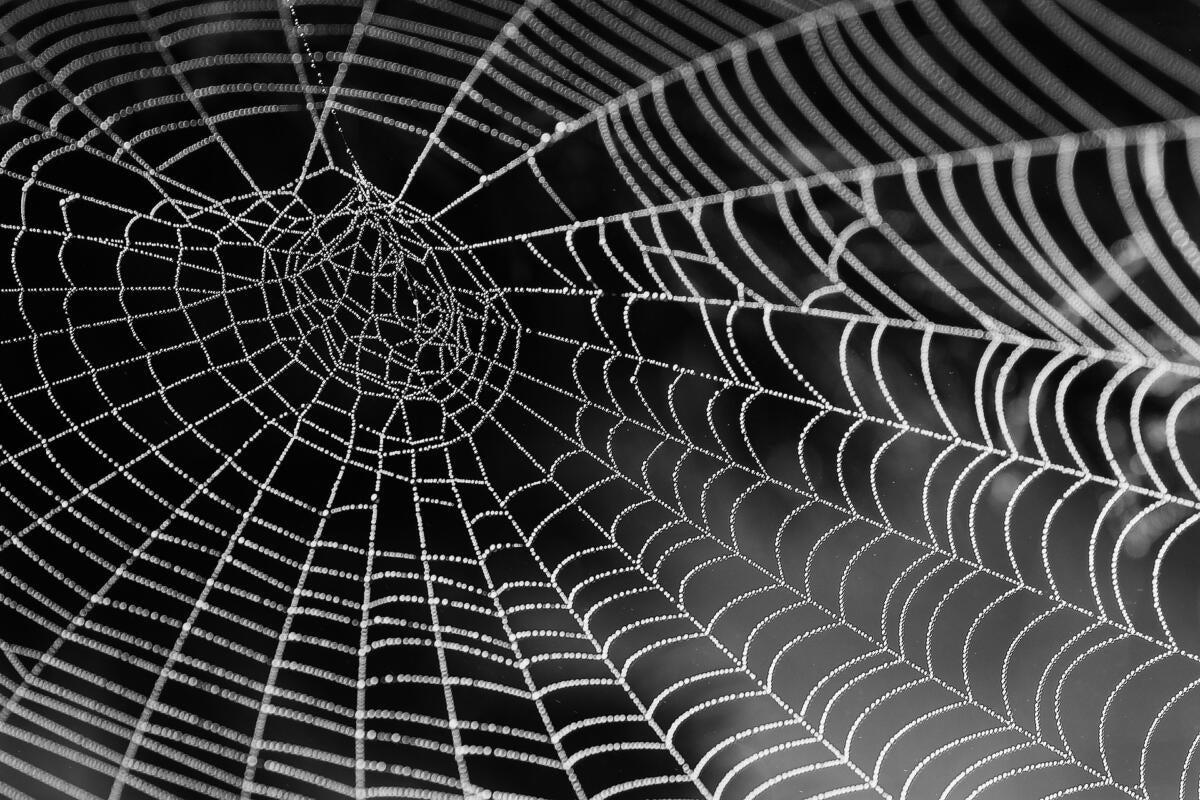Understanding WAGI, the WebAssembly Gateway Interface