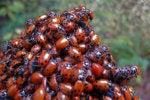 ladybugs bugs