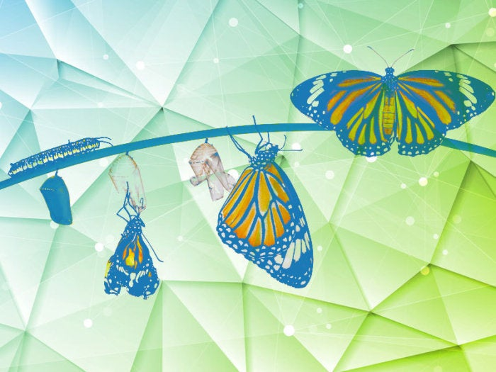 butterfly birth morphing