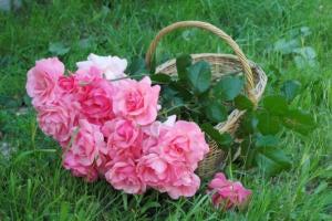 flowers roses basket bouquet