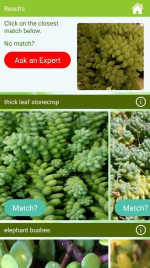 garden answers identify