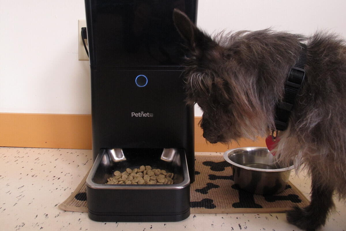 Petnet SmartFeeder review: Robot pet feeder meets smartphone app with mostly good results