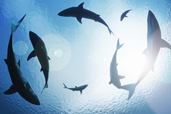 sharks circling underwater