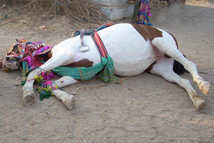 horse asleep