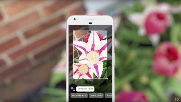 Google Lens Plant Identification
