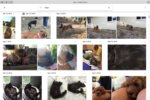 Google Photos image search for dogs