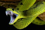 Snake cyberespionage malware is ready to bite Mac users
