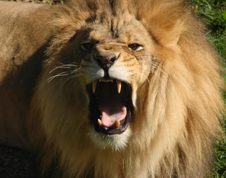 apple roars like a lion cio