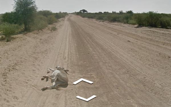 donkey-dead.png