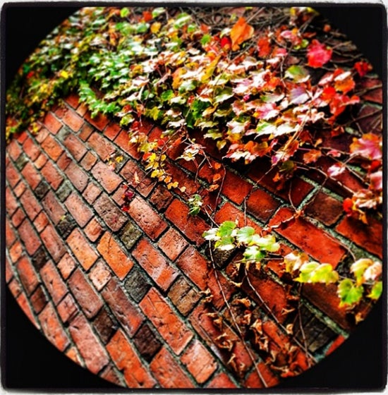 Brick Wall with Foliage at Harvard University