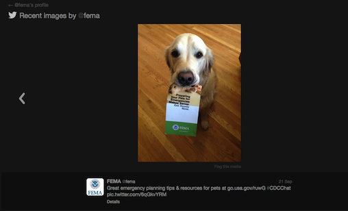 FEMA dog
