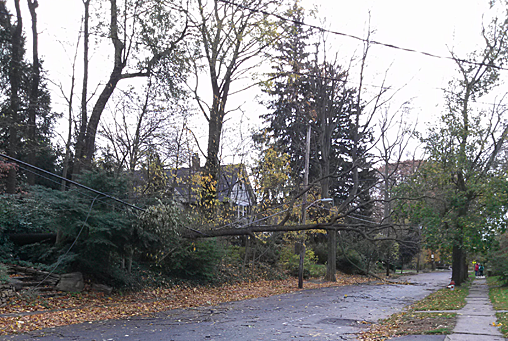 downed tree on power lines