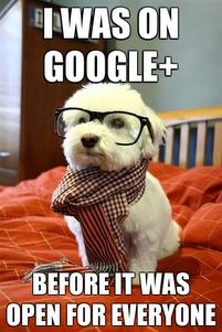 google-dog.png