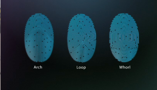 apple touch ID screen.png
