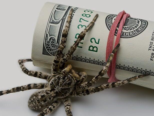 Spider on money roll