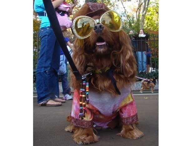 A picture of a dog wearing a hippy clothes from the 1960s
