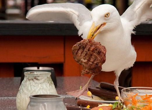 5_seagull-100348286-orig.jpg