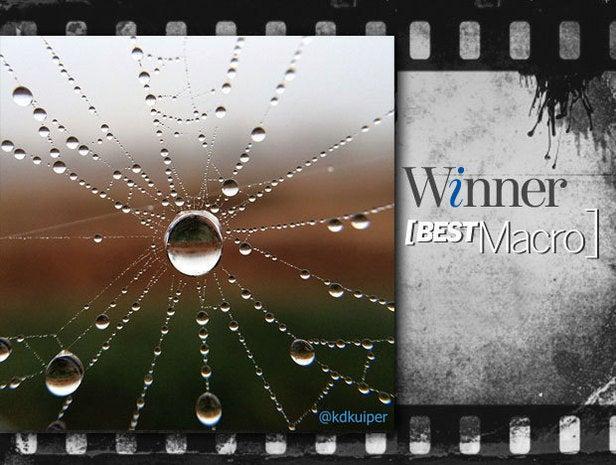 Best Macro: Winner