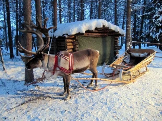 Picture of a reindeer sleigh in Finland