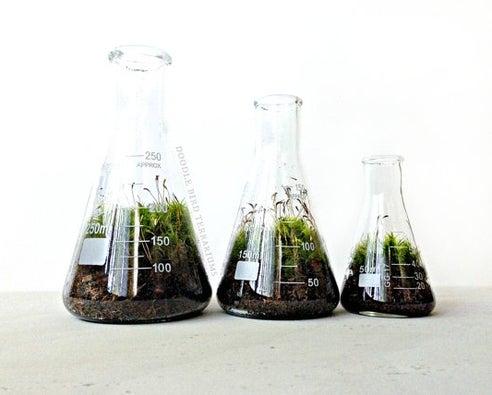 Science beaker terrarium