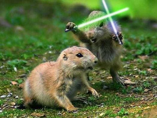 Prairie dog Jedi